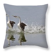 Western Grebe On Lake Throw Pillow