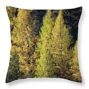 Western Larch Throw Pillow
