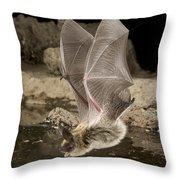 Western Long-eared Myotis Drinking Throw Pillow