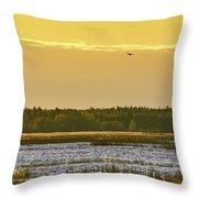 Western Marsh Harrier At Puurijarvi Throw Pillow