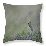 Western Meadowlark Morning Throw Pillow