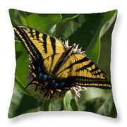 Western Tiger Swallowtail 2 Throw Pillow