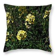Western Wallflower Along Etiwanda Falls Trail In San Gabriel Mountains-california Throw Pillow