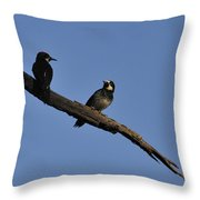 Western Woodpeckers Throw Pillow