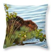 Wet Beaver Throw Pillow