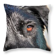 Wet Black Lab Throw Pillow