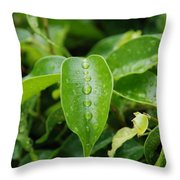 Wet Bushes Throw Pillow