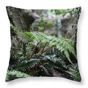 Wet Ferns Throw Pillow