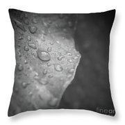 Wet Kisses Throw Pillow