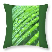 Wet Sago Throw Pillow