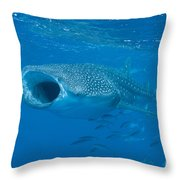 Whale Shark, Ari And Male Atoll Throw Pillow by Mathieu Meur