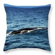 Whale Watching Balenottera Comune 3 Throw Pillow