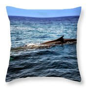 Whale Watching Balenottera Comune 4 Throw Pillow