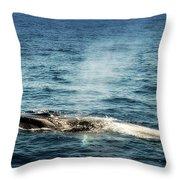 Whale Watching Balenottera Comune 5 Throw Pillow