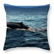 Whale Watching Balenottera Comune 6 Throw Pillow