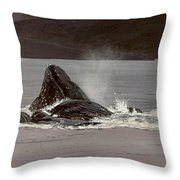 Whales Feeding Throw Pillow