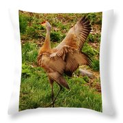 What A Show Off Throw Pillow