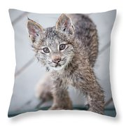 What Are You Throw Pillow by Tim Newton