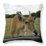 Whatcha Got In There Throw Pillow