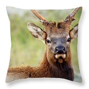 Whatcha Looking At Throw Pillow