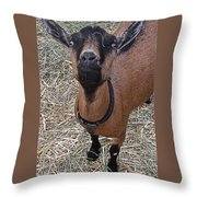 Whats Up Doc Throw Pillow