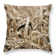 Wheat Close Up Summer Season Throw Pillow