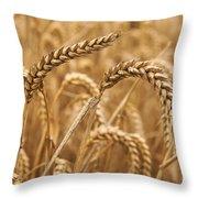 Wheat Ears 1 Throw Pillow