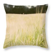 Wheat Field Closeup Throw Pillow
