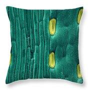 Wheat Leaf Stomata, Sem Throw Pillow