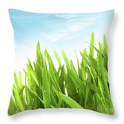 Wheatgrass Against A White Throw Pillow by Sandra Cunningham