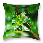 When You're Thirsty... Drink Throw Pillow
