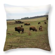 where the Buffalo Roam 3 Throw Pillow