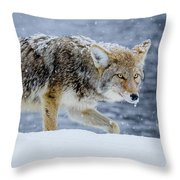 Where The Coyote Walks Throw Pillow