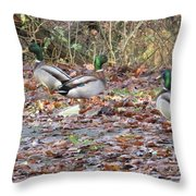 Which Way Is It Anyway Throw Pillow