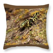Whip Tailed Wasp Throw Pillow