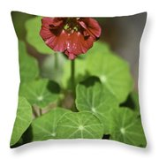 Whirleybird Nasturtium Throw Pillow