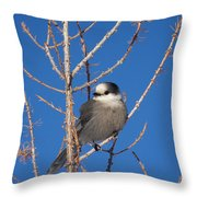 Whiskey Jack Perched On A Winter Larch  Throw Pillow