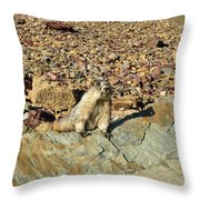 Whistle Pig Of The Rockies Throw Pillow