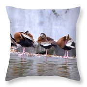 Whistling Ducks Grooming Throw Pillow