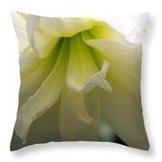 White Amarillys Close Up Throw Pillow
