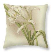 White Amaryllis   Ismene Andreana Throw Pillow