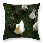 White And Brown Ducks Throw Pillow