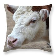 White And Brown Heifer Dairy Cow Throw Pillow