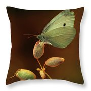 White And Green Butterfly On Dried Flowers Throw Pillow