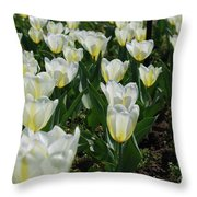 White And Pale Yellow Tulips In A Bulb Garden Throw Pillow