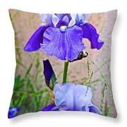 White And Purple Irises At Pilgrim Place In Claremont-california- Throw Pillow