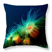 White Anemone Throw Pillow