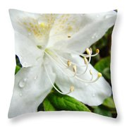White Azalea Flower 9 Azaleas Raindrops Spring Art Prints Baslee Troutman Throw Pillow