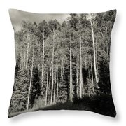 White-barked Birch Forest 3 Throw Pillow