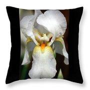 White Bearded Iris 2 Throw Pillow